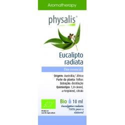 PHYSALIS Eucalipto radiata...